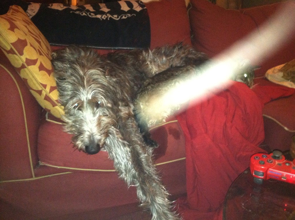 Explain it away all you want. I didn't fake this. Raebert has always been beyond human comprehension. (See Deerhound Diary.)