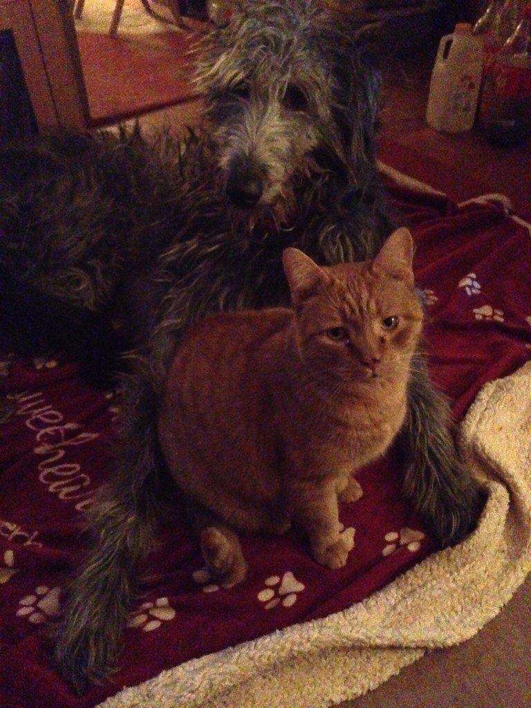 Dogs hate cats and vice versa.