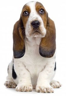 Yeah. Basset Brains.
