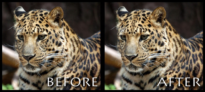 Do leopards change their spots? Not often. We just forget what their spots have always looked like.