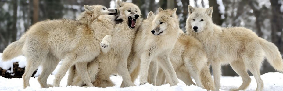 """We are the wolves of the high spirit. We are warning you to save you. Ignore us at your peril."""